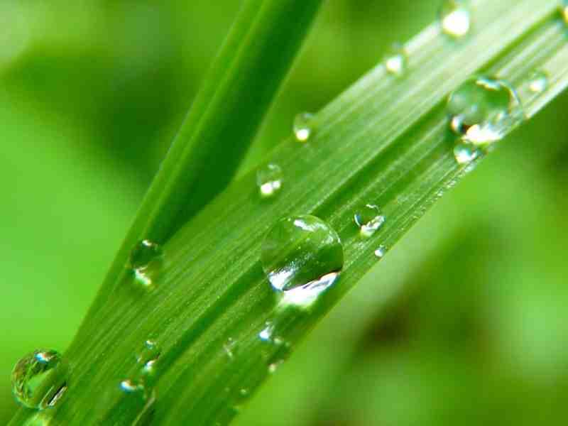green and raindrops